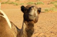 Maroko_157