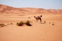 Maroko_415